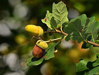 Cuir tanné végétal : quand l'innovation vient de la tradition